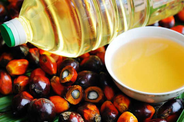 The Differences in Palm Olein & Palm Oil